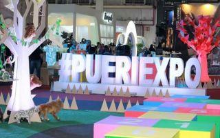 Pueri-Expo2018.jpg