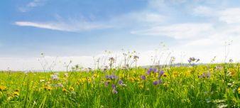 nachhaltigkeitwiesefotolia63736990xl.jpg